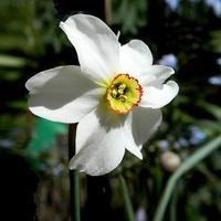 Jedyny kwiat
