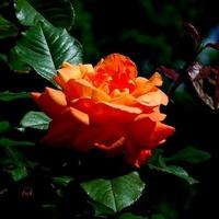 kwiatek na dobranoc