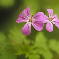 Kwiatki z łąki