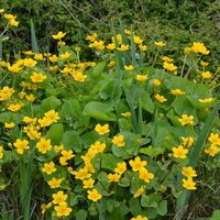 Kwiaty bagienne