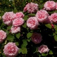 Kwiaty na radość i dramaty