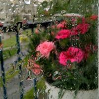 pastelowo w deszczu