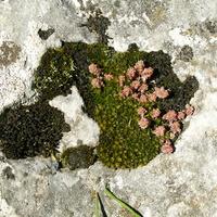 Roślinki na skale