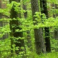 Roztocze - W Parku Narodowym:)
