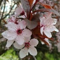 Wiosenne Kwiaty Dla