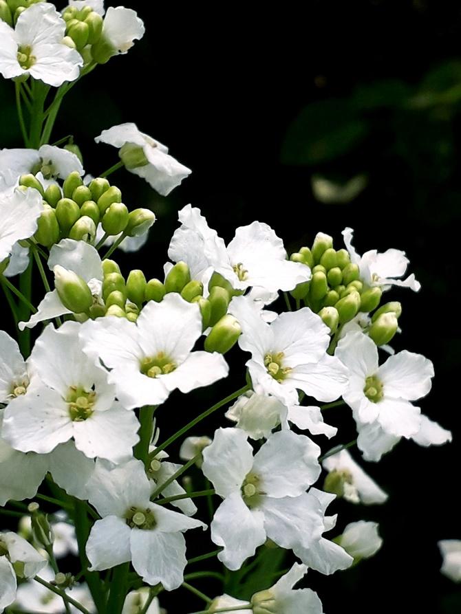 Kwiaty.....chrzanu !