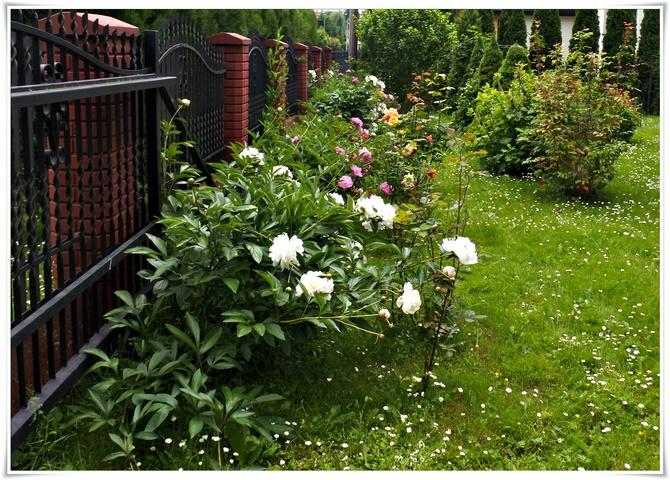 W ogródku Maryli