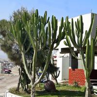 Kaktusy.....