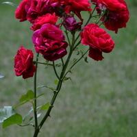 Kwiaty na moim osiedlu