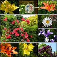 Lilie,róże,liliowce