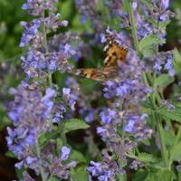 niebieskie kwiaty i motyl