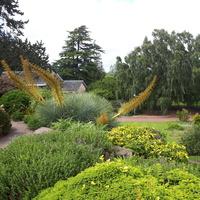 Ogród  w Edynburgu