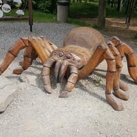 pajączek w zoo