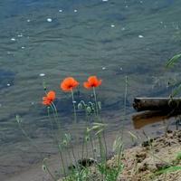 Przy brzegu rzeki chłodniej.