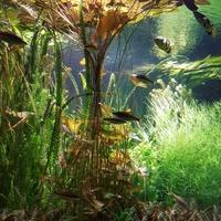 rośliny wodne w palmiarni...