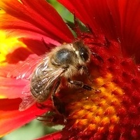 W towarzystwie pszczółki