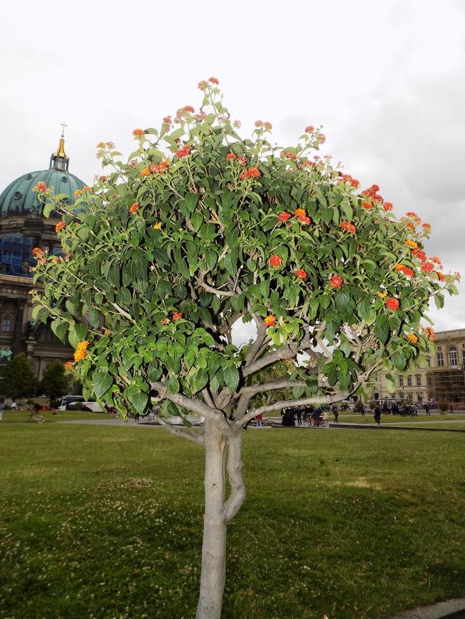 Co powiecie na takie drzewko?