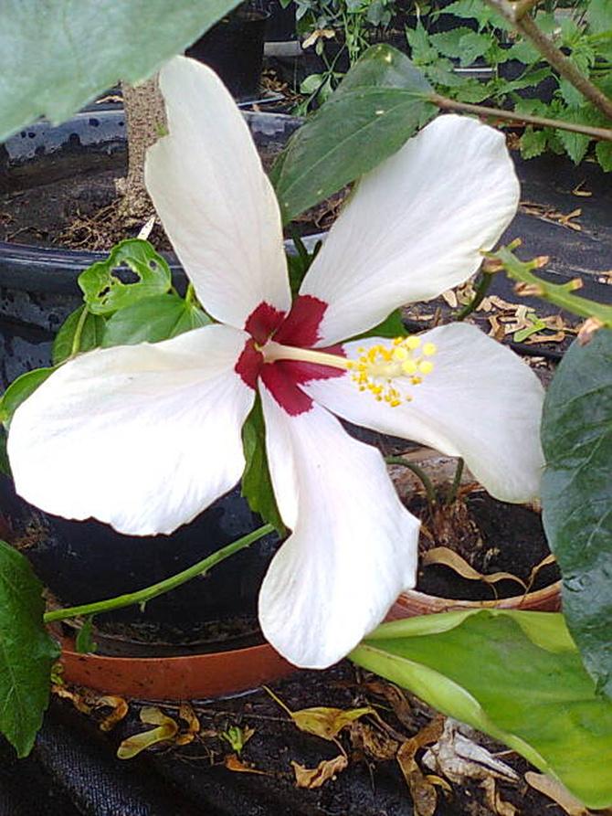 Pierwszy kwiat w tym sezonie