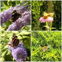 Aniu, oddaję motylki:)