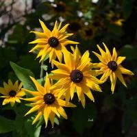 kwiatki na delikatnym słońcu