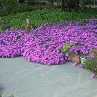 kwiatowy dywanik
