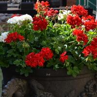 Kwiaty w naczyniu z bliska