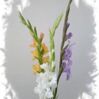 Mieczyki Gladiole