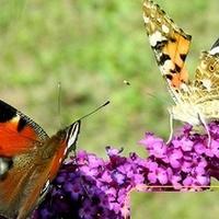 Nie bijcie się motylki!;)