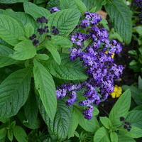 niebieskie kwiatuszki