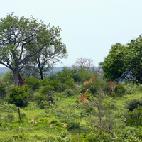 Park Krugera w RPA