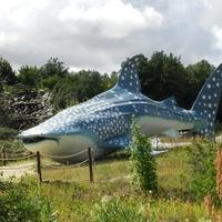 Park,wodospad i ogromny rekin wielorybi