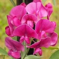 Różowych snów, miłego dnia :)