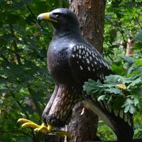 w lesie można spotkać takiego drapieżnego ptaka
