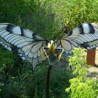 W lesie spotkałem takiego motyla.