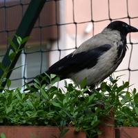 żywy ptak na moim osiedlu