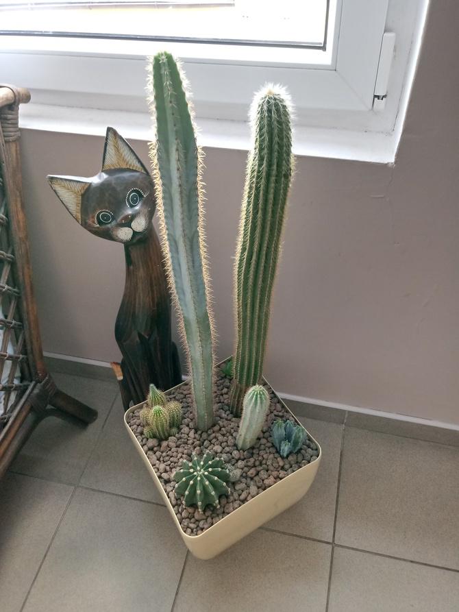Kaktusowy ogród