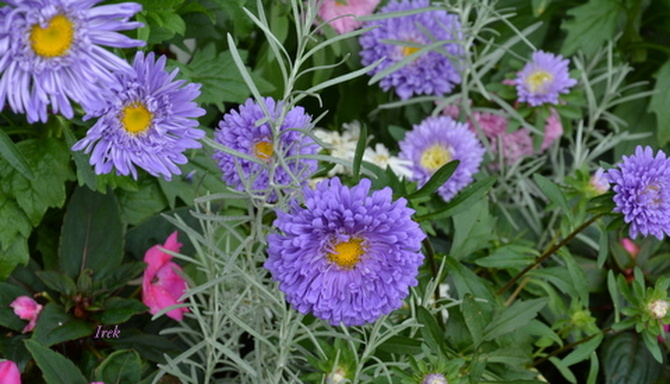 Kwiaty w parku
