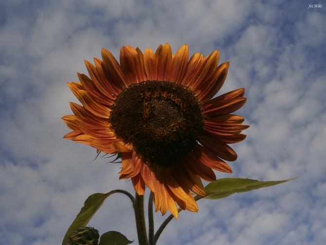 Słoneczka na jutro dla wszystkich..
