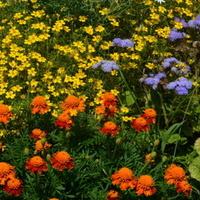 Kolorowe kwiaty w Parku Wilanowskim.