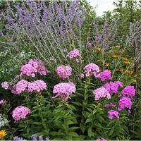 Kolory w ogrodzie...