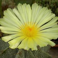 Kwiat dnia :)
