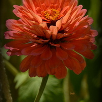 Kwiat w Parku Wilanowskim.