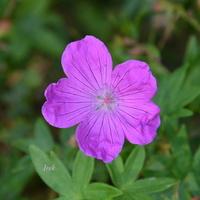 kwiatek z bliska nad sztucznym kanałem