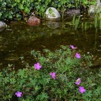 kwiatki nad sztucznym kanałkiem