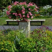 Kwiaty w gazonie w Parku Wilanowskim