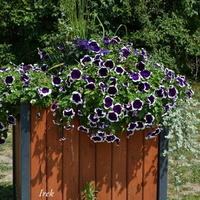 kwiaty w ozdobnym pojemniku