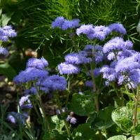 Kwiaty w Parku Wilanowskim