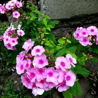 Kwitną jak w środku lata :)