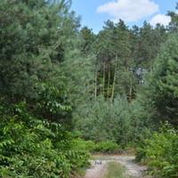 Lasy w czasie wielkiej suszy.