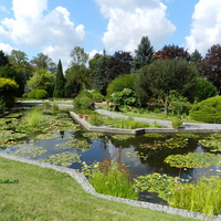 Lilie wodne-Ogród Botaniczny we Wrocławiu